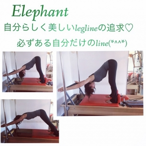 Instagram-Elephant by reformer